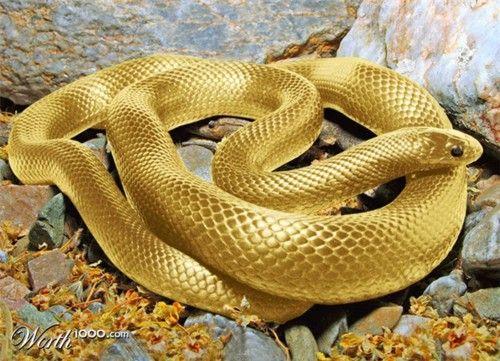Poisonous snake, Ananda, Evil poisonous snake, World HonouredOne